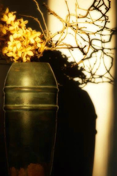 Light & Shadow - ID: 4201393 © Loan Tran