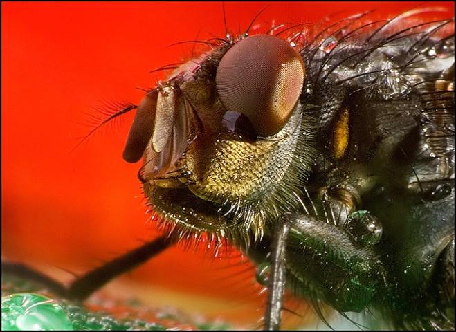Fly ( portrait )
