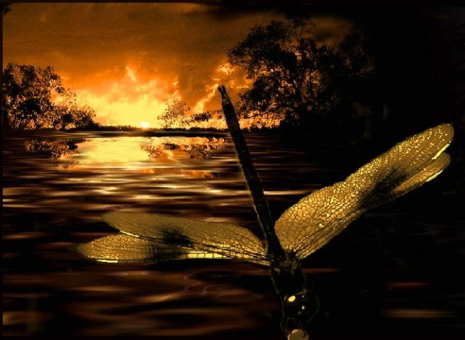 ~Sunset dragon~