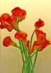 The Red Callas