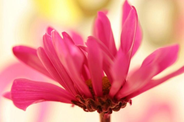 Happy Flower - ID: 4218572 © Agnes Fegan