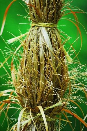 grass tied