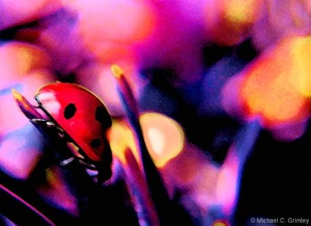 ladybug_1_fresco_glow_edited-2