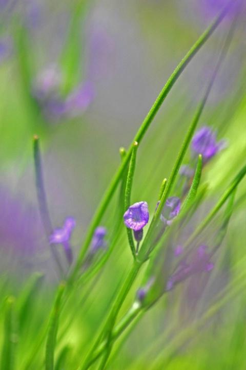 Lavender Paints