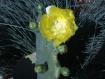 "Yellow ""Rose&..."