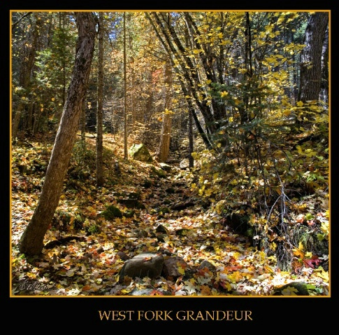 West Fork Grandeur - Oak Creek Canyon - ID: 4261647 © Edward H. Mertz