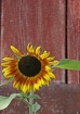 Doxzon Farm sun