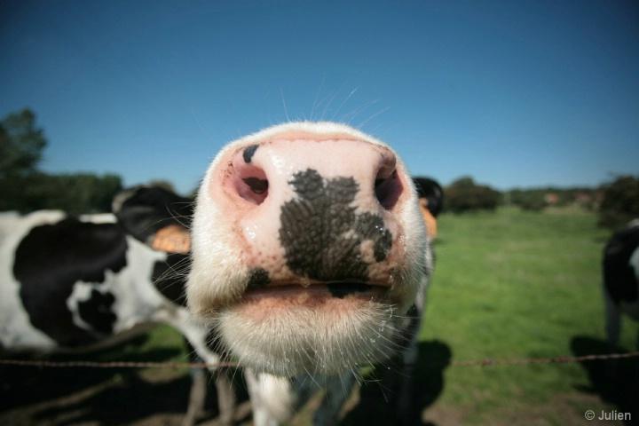 Nosy nosy ! too nosy