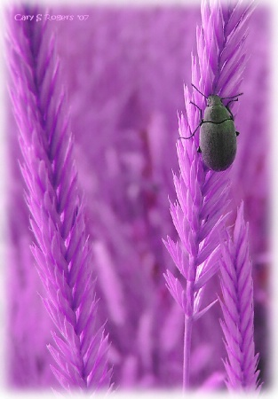 When Beetles Dream...