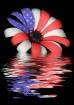 Flooded Freedom F...
