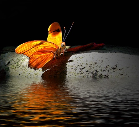 Butterfly on Water's Edge