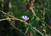 Flower at Waterfa...