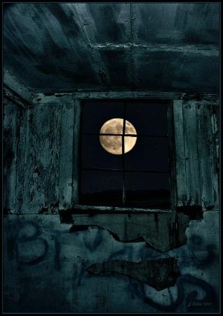 Bullfrog Moon