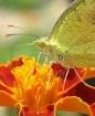 Butterfly macro 2...