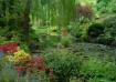 Garden Reflection...