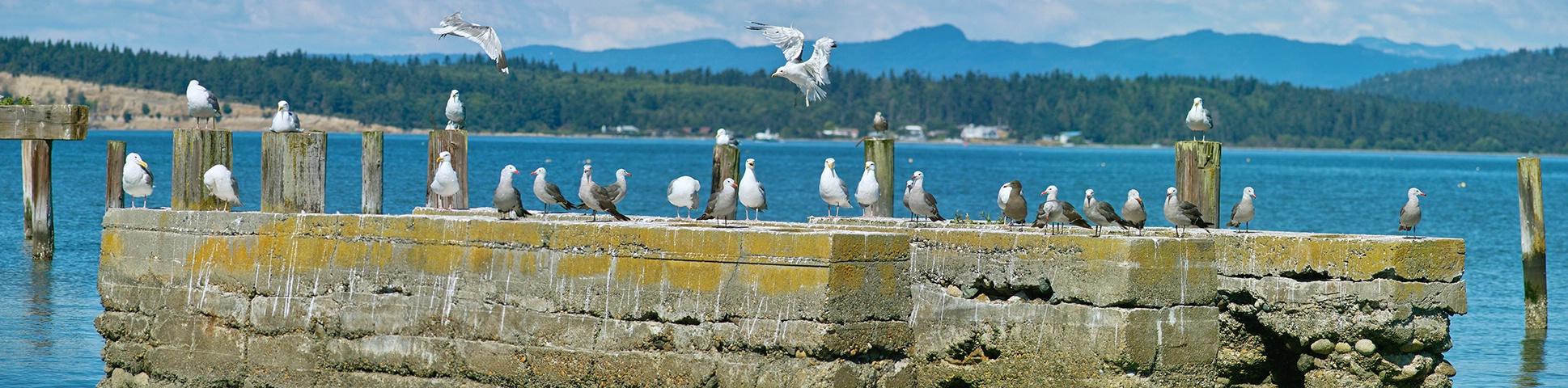 <b>Anacortes Seagulls</b>