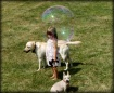 My Little Bubble ...