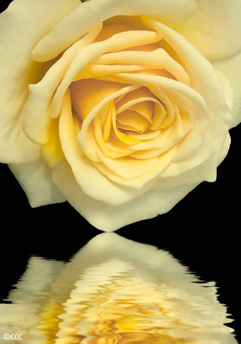 Honey Reflection - ID: 4339080 © Candice C. Calhoun