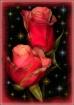 Rosebuds In The S...