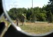Reflection of Fun