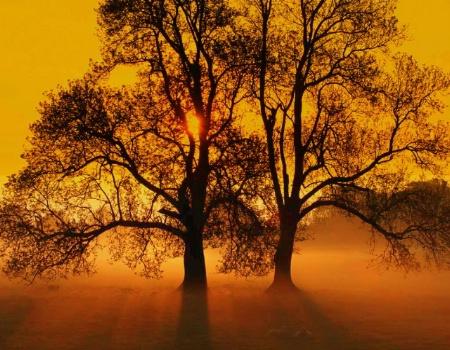 Dusty Tree