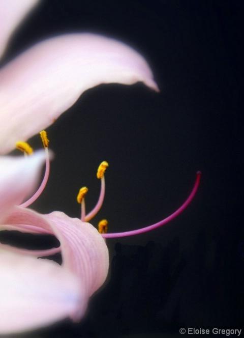 Delicate Beauty - ID: 4363177 © Eloise Bartell