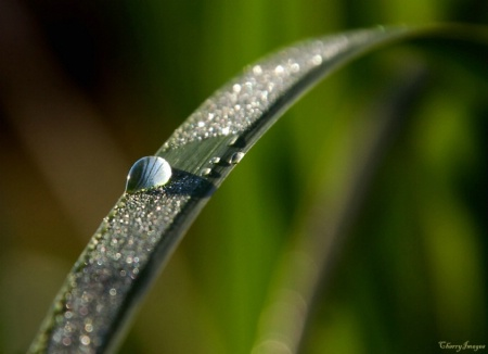 Morning Dew with Bokeh