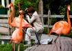 Among Flamingos