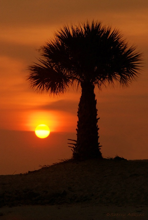 Florida Sunset - ID: 4391069 © Sherry Karr Adkins