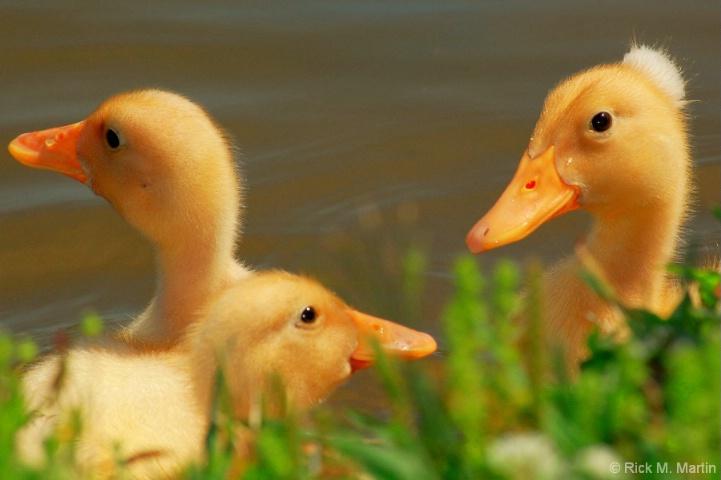 Duck duck, spike.