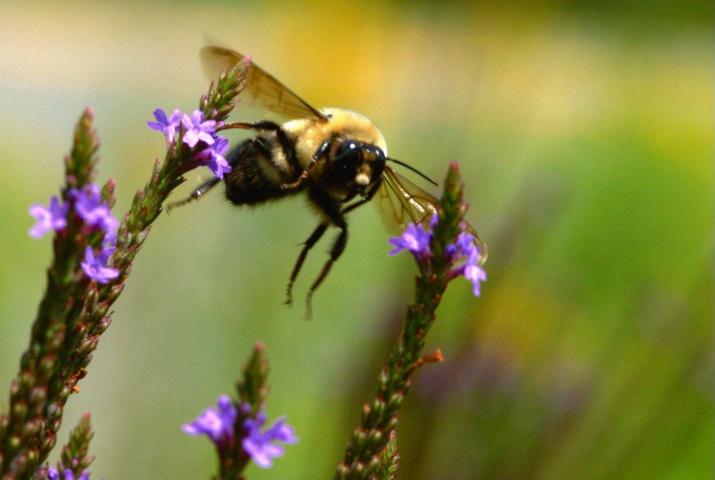 BEE TWEEN FLOWERS