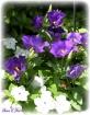 Passion in Purple