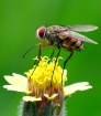 Long leg Fly...
