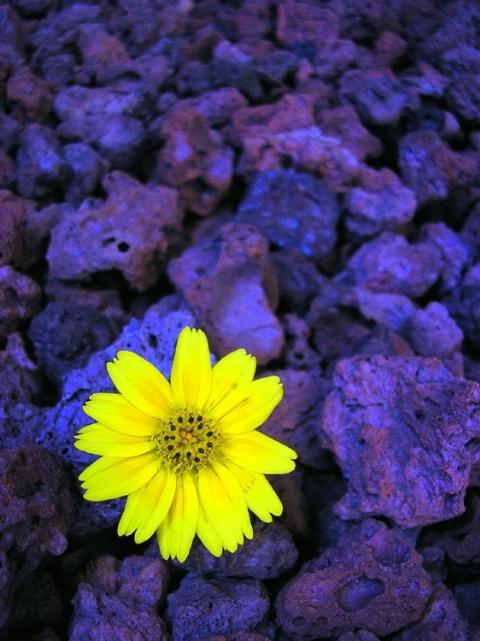 Pretty in Yellow