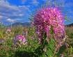 Flagstaff Summer