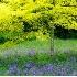 2Beacon Hill Park Spring - ID: 4467526 © Teryl L. Monson