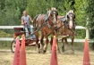 Cart Class Horse ...