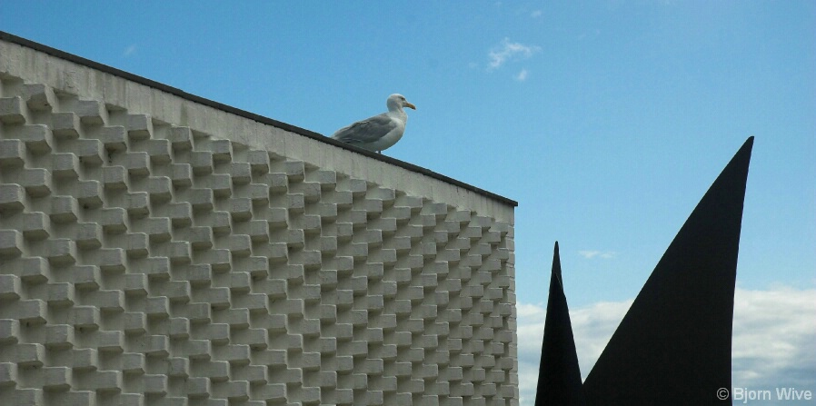 Seagull and art
