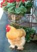 mr_cluck-cluck