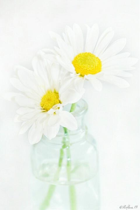 Today's Daisies - ID: 4509682 © Brenda W. LaFleur