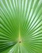 Patterns of natur...