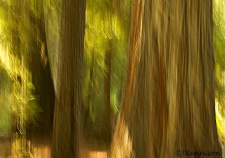 Windswept Grove