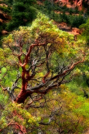Secret Canyon AZ