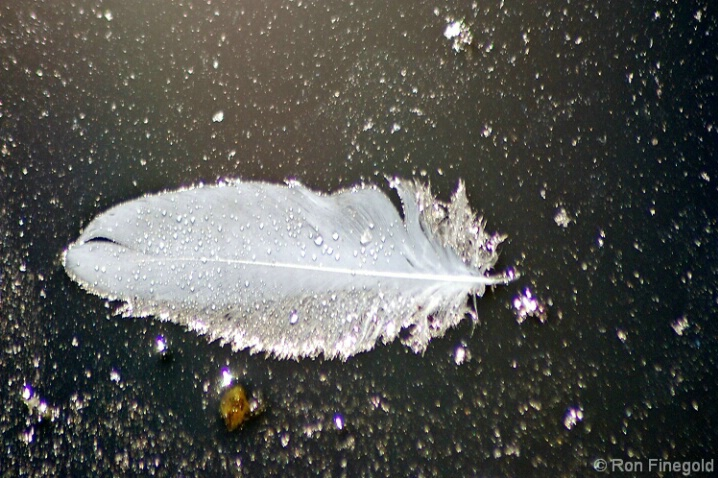 Is it a feather, a fish or a UFO?   - ID: 4542136 © Ronald Finegold