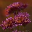 Floral Echo
