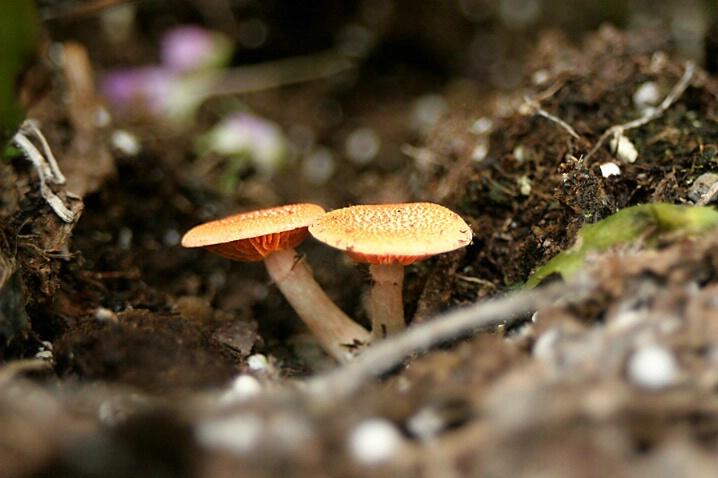 Middle Earth 'Shrooms - ID: 4570948 © Dawn Orr