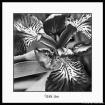 Wild Iris 3