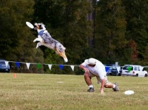 Canine Frisbee 2005
