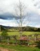Threshold Farm.