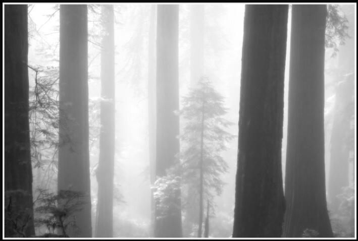 redwood mist 5 - ID: 4619768 © Stuart May
